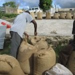 Lefay and Franklin bagging the 2008 crop as storm clouds approach the drying patio.